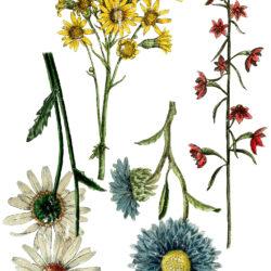 IOD Transfers Blumen