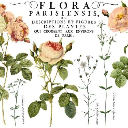 IOD Decor Transfer Flora Parisiensis