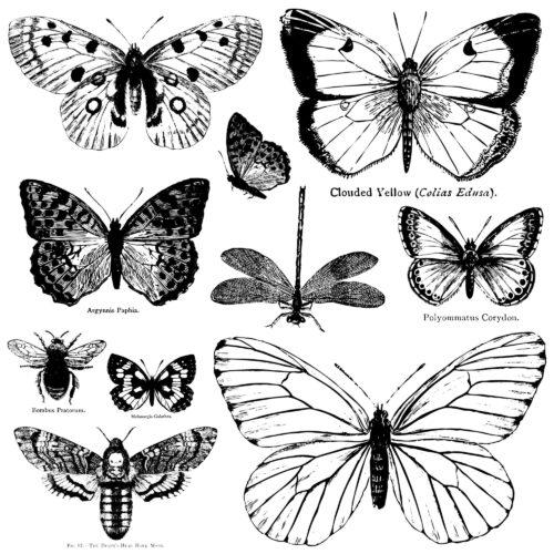 Iron Orchid Designs Stempel Butterflies