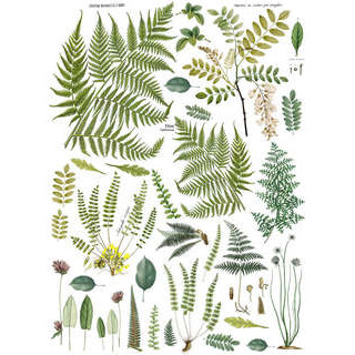 iod-decor-transfers-fronds-botanical