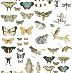 iod-entomology-etcetera-transfer-iron-orchid-designs